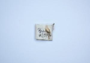 Foto 1 _Transição-e_queda_Obra Stalker de Jonas Arrabal  _ Impressão sobre papel de algodão _ 2015