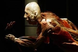 Human-body-exhibition