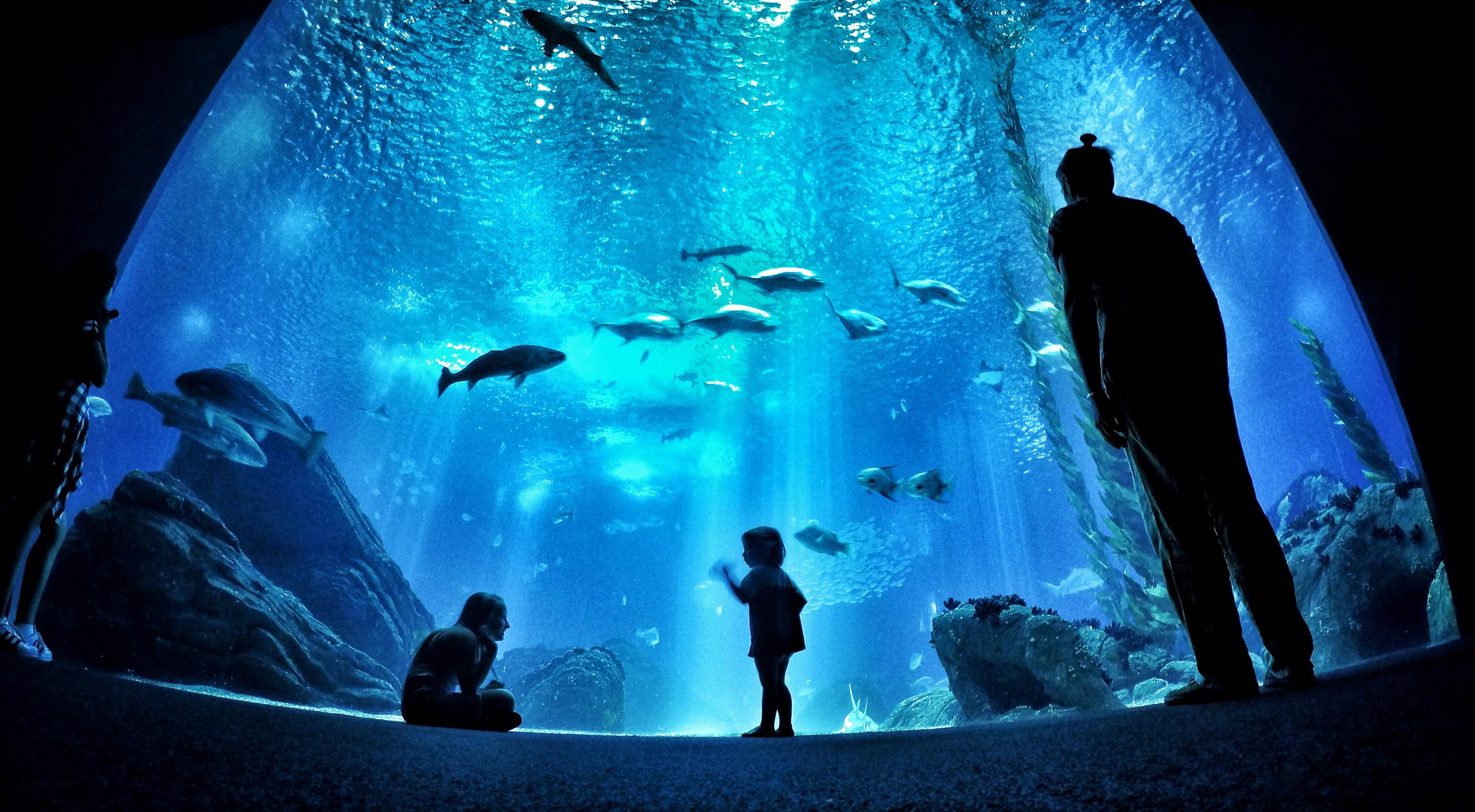 oceanario-de-lisboa-foto-de-bruno-alencastro-fotografo-selecionado-porto-alegre
